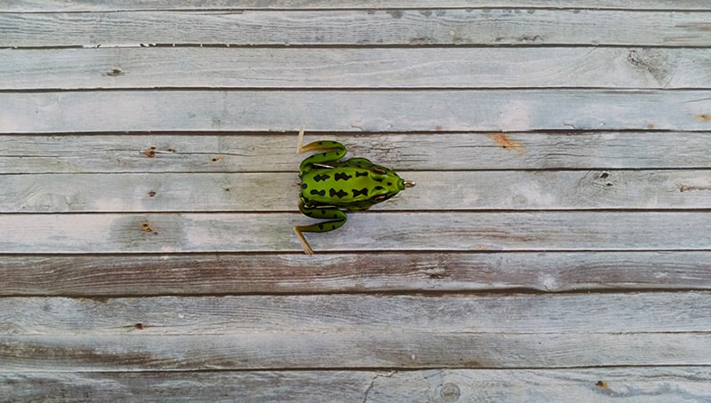 Lunkerhunt Pocket Frog Green Tea