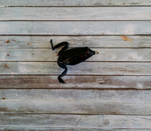 Lunkerhunt Pocket Frog Texas Toad