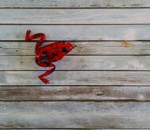 Lunkerhunt Pocket Frog Fire Belly