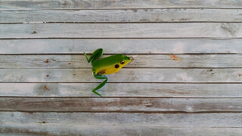 Lunkerhunt Pocket Frog Bull Frog