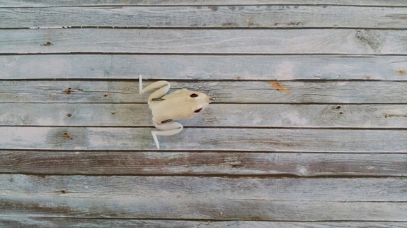 Lunkerhunt Pocket Frog Pearl