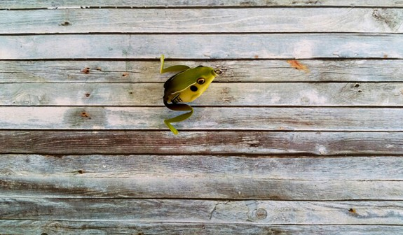 Lunkerhunt Pocket Frog King Toad