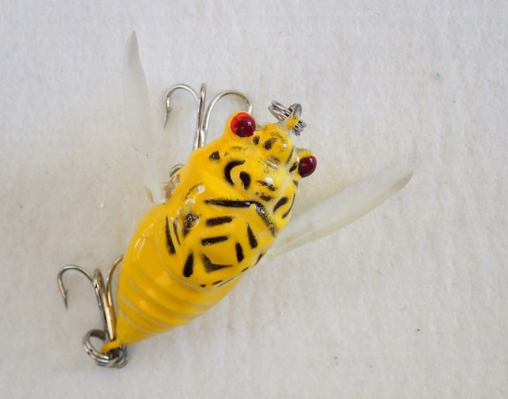 Cicada Winged 38mm Yellow black markings